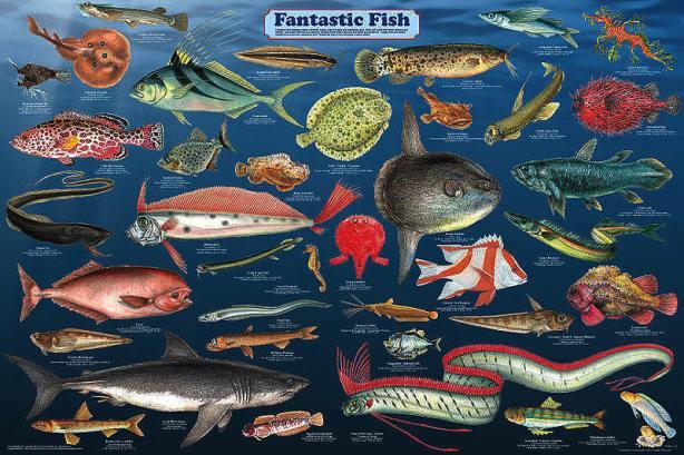 fantastic_fish