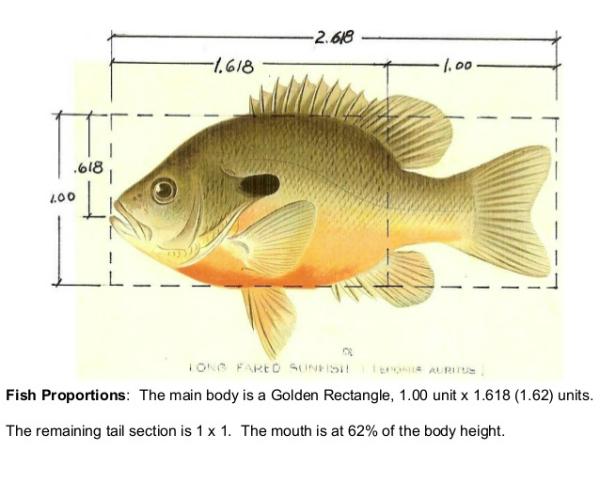 fibonacci-fish